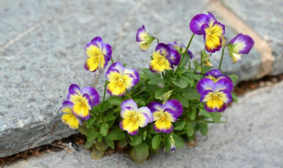 Αισιοδοξία - Αντίδοτο Στην Αντιμετώπιση Των Χρόνιων Ασθενειών